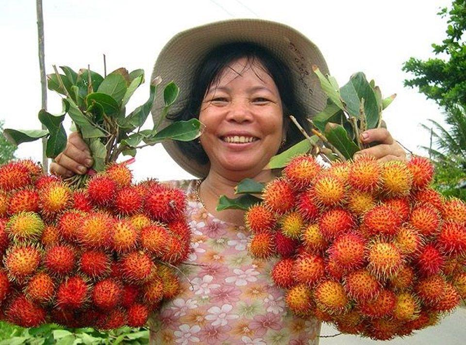 Trong Cay Chom Chom Thai